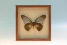 Деревянные рамки со стеклом для самостоятельного изготовления сувениров