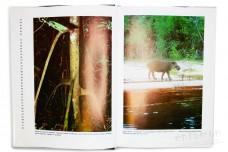 Зеленый ад - исчезающий рай. Репортаж из тропического дождевого леса - Регёш Я.