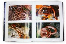 Змеи Кавказа: таксономическое разнообразие, распространение, охрана - Туниев Б.С. и др.