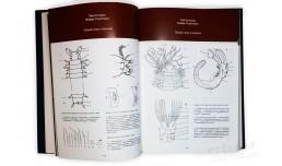 Флора и фауна Белого моря: иллюстрированный атлас
