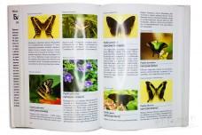Бабочки. Иллюстрированная энциклопедия - Вейбрен Ландман