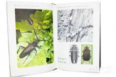 Редкие насекомые - Мирзоян С.А.