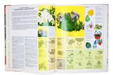 Самые распространенные комнатные растения - Дэвид Лонгман