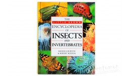 The Little brown Encyclopedia of Insects and Invertebrates - Maurice Burton, Robert Burton