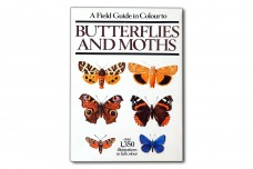 A Field Guide in Colour Butterflies and Moths - Ivo Novak