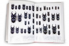 Stag Beetles II (Lucanidae). Vol. 5. Endless Collection Series - Tetsuo Mizunuma