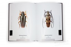 The Prionids of the World. Illustrated catalogue of the Beetles. Vol. 1 - Ivo Jenis