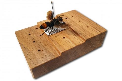Блок для установки этикеток и насекомых