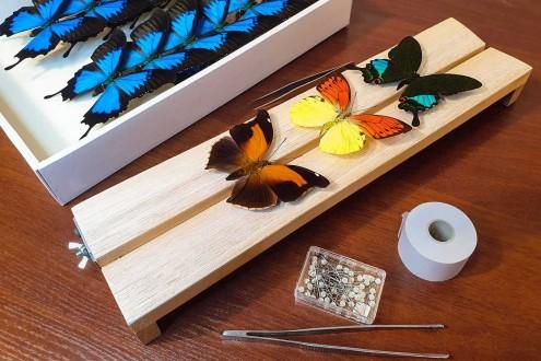 Расправка насекомых