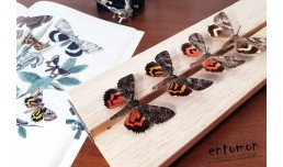 Определение насекомых