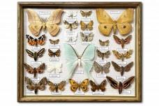 Ночные бабочки России