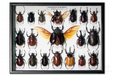 Giant beetles of the World (19 шт.)