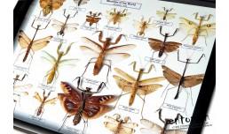 Mantidae of the World
