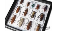 Longhorn Beetles (13 ps.)