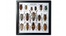 Longhorn Beetles (16 ps.)